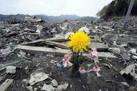 flower in rubble