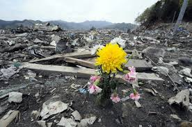 flower in rubble