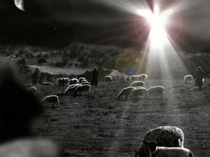 Christmas shepherds field animals